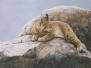 Wildlife Watercolors